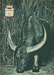 KA omslag nr 1 1960