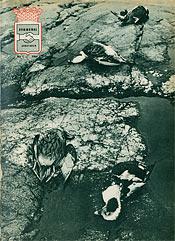 KA omslag nr 1 1964