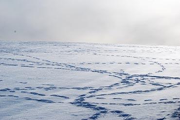 Snön är snart ett minne blott.