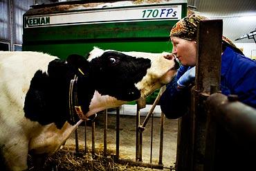 17.08 Jobbet underlättas av att Ann tycker väldigt mycket om kossor.