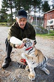 Drygt fyra månader gammal bor Ninja nu på djurparken i Junsele och har börjat äta köttbullar. Men vällingflaskan är fortfarande populär.