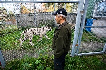 """Bengt Eriksson har skött många olika djur under sina 30 år, men det största förändringen kom med tigrarna. """"Då handlade allt helt plötsligt om att skaffa fram kött, jag har fått stå många timmar och slakta."""""""