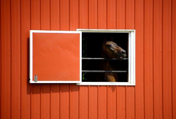 Häst i stall.