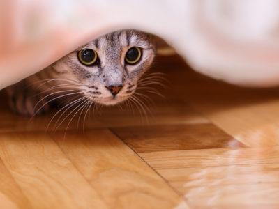 Katt.
