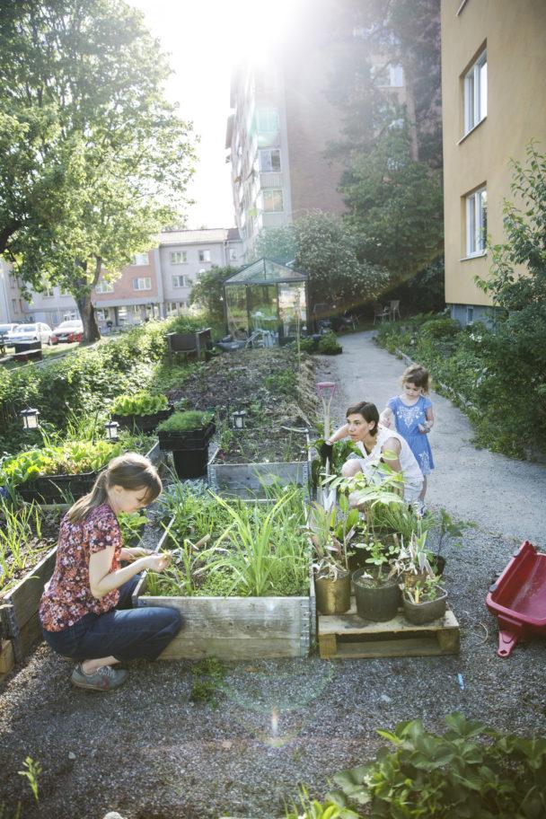 Theres Lundén och Louise Edlund med dottern Agnes rensar gärna ogräs.