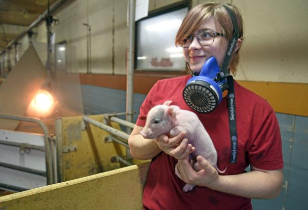 Ebba Ståhl, grisskötare.