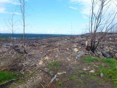 Brandområdet i Västmanland 2015.