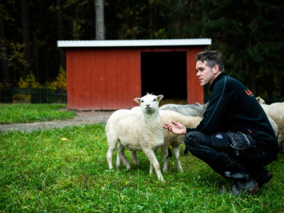 Jimmy Fredriksson med Tabacktorpsfåren.